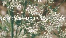 Natura erva doce