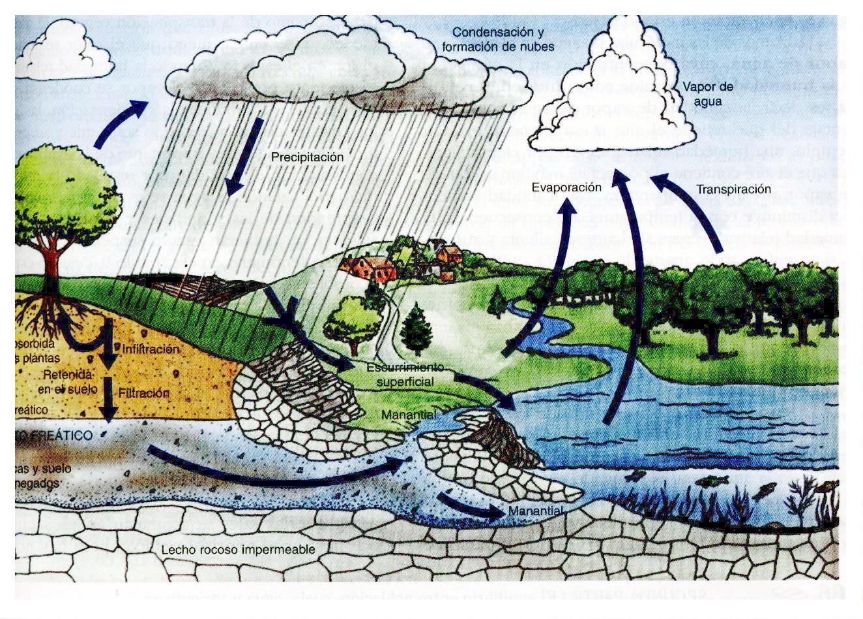el ciclo hidrologico o ciclo del agua es el proceso de circulacion del ...