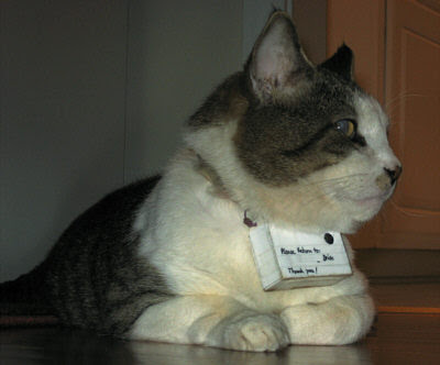 Cat Defender Em Katzen Kameras Em Are Not Only Cruel And
