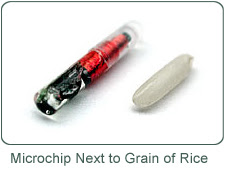 Microchip & Grain of Rice