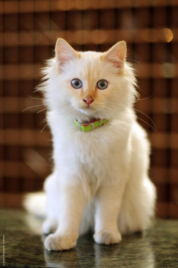 Cat Defender: Hôtel Le Bristol...