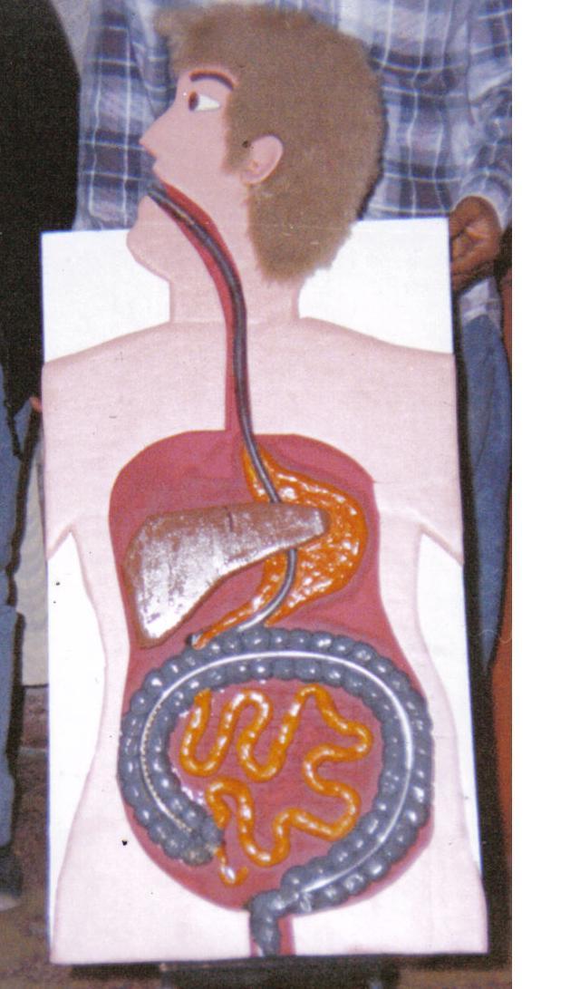 Maqueta Del Aparato Digestivo