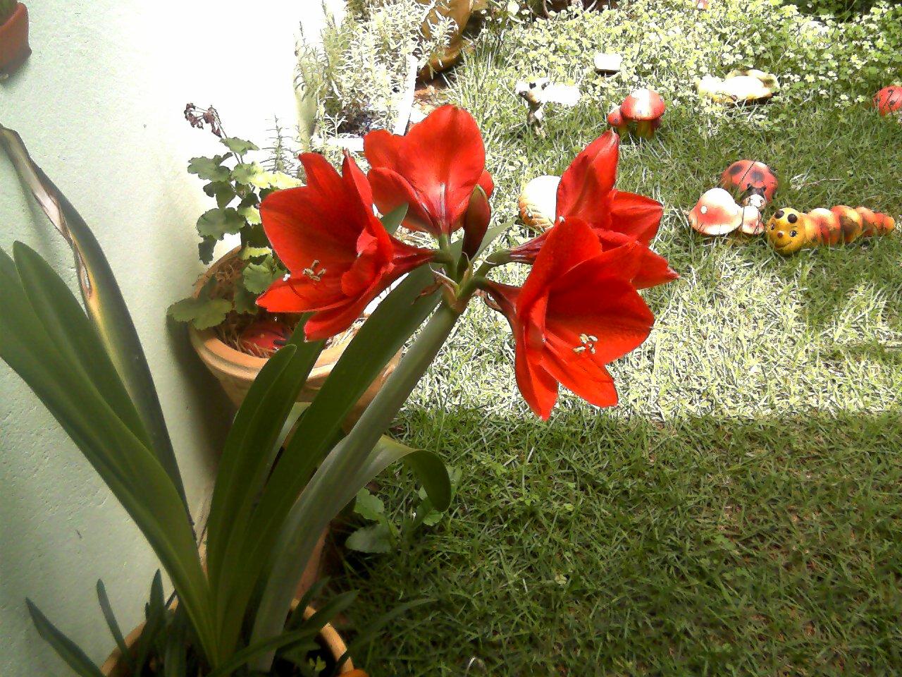 flores no jardim de deus : flores no jardim de deus:chegou com alegrias e flores no meu jardim! Vejam que belas flores de