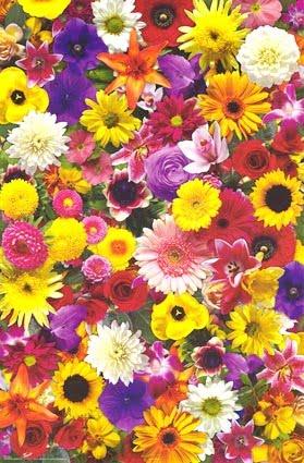 Arcoiris de mil colores primavera for De mil colores