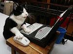 Gato escribano