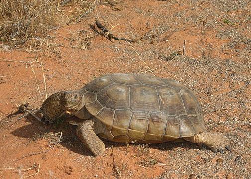 St. George's protected wildlife