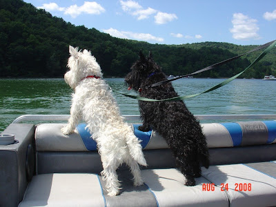 Scottie And Westie West highland terrier and