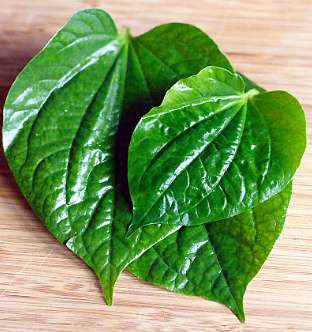 benefits of betel leaf
