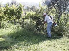 O trabalho no campo