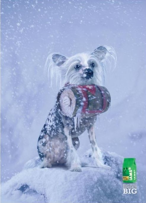 iams-dog-food-ad9