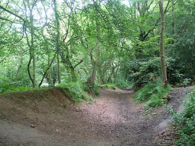 Eltringham Woods