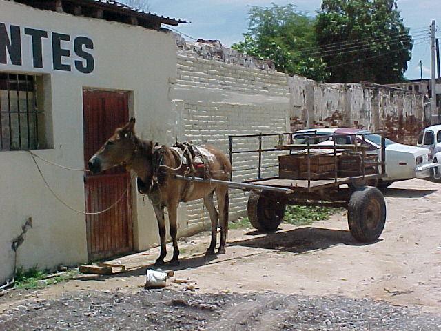 Tipica carreta con mulas que usan los vendedores ambulantes en Culiacán Rosales.