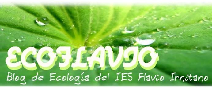 Ecoflavio