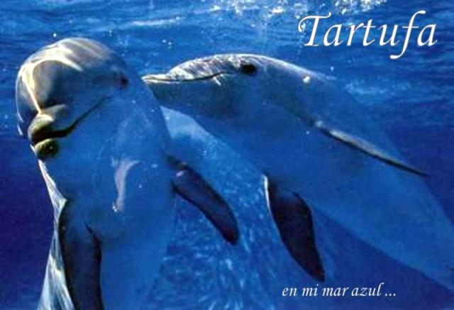 Tartufa