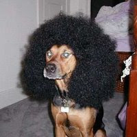 This dog is clearly a fan of Snoop Dogg, and wears a hot Afro to prove it