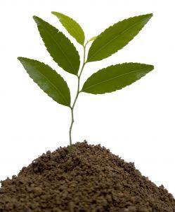 organic%20Plant%20feed.jpg (249×300)