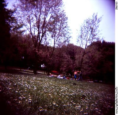 Fotografia di gruppo di giovani in un parco pubblico. Macchina fotografica Holga 120 CFN