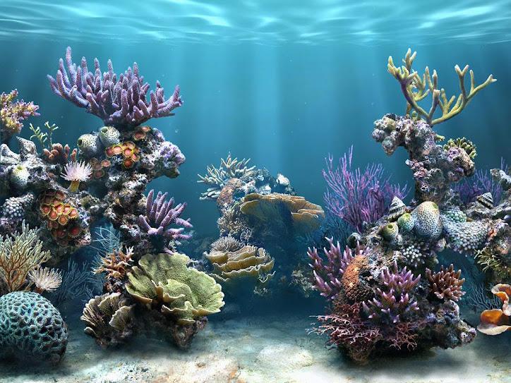 Plafoniere Per Marino : Tutto per l acquario marino plafoniera a led