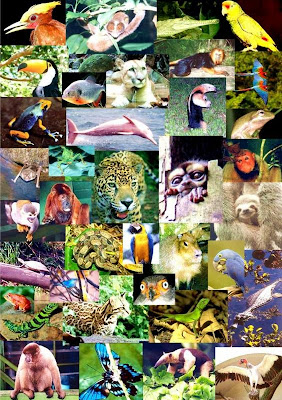 amazon rainforest plants collage. ecofriendly christmas ideas caption collage of amazon animals rainforest plants p