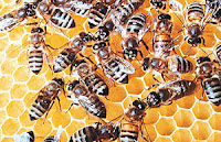 The mass die-off of bees