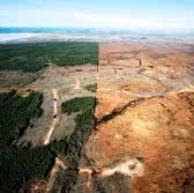 Tar sands - before and after