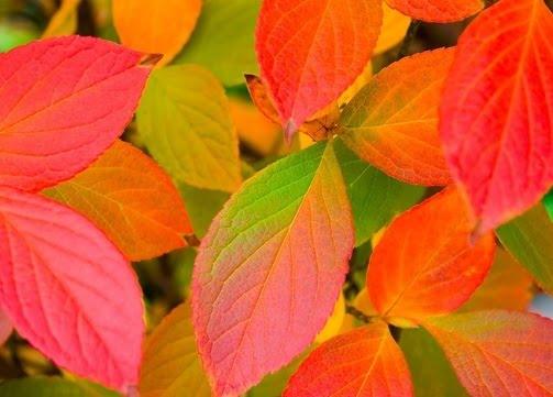 Photobucket autumn background Pictures autumn background Images