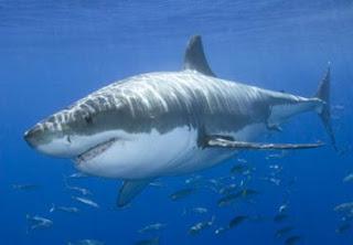 Ocean Animal