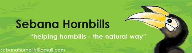 Sebana Hornbills