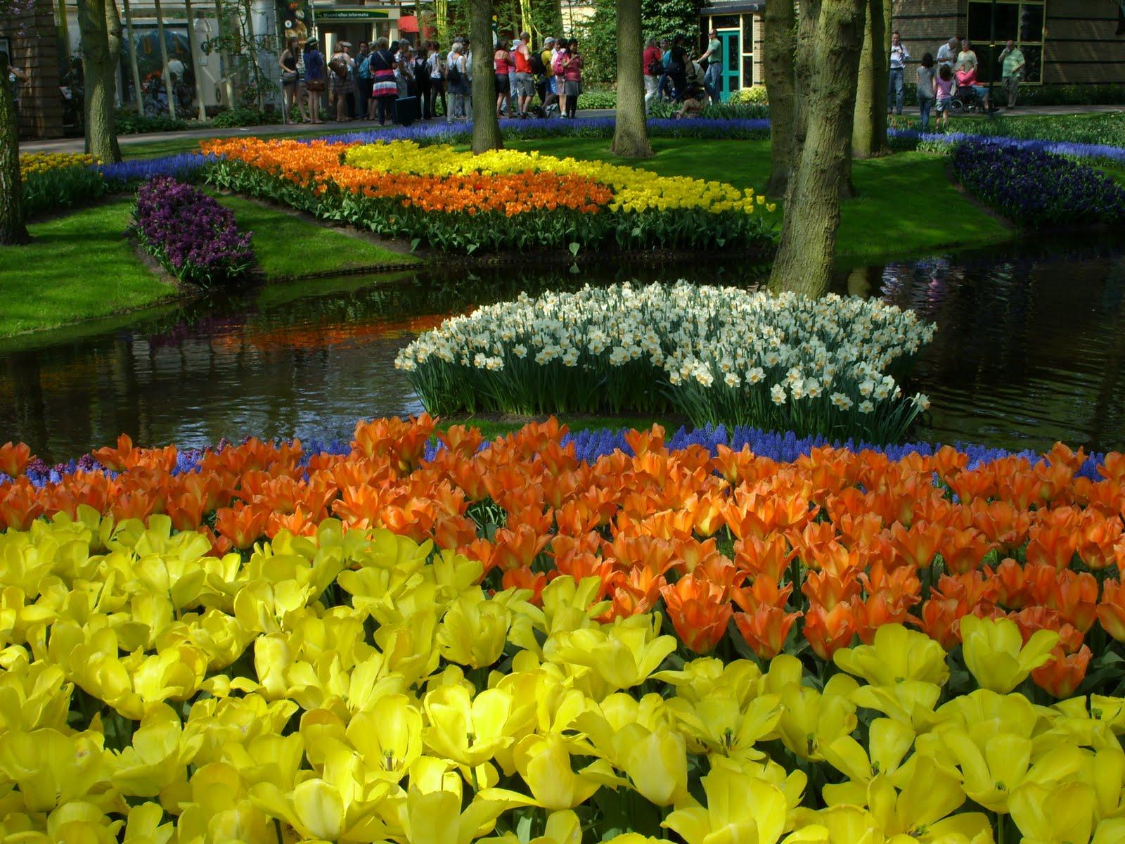 Многолетние цветы цветущие с весны до осени фото и название