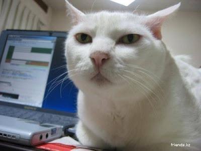 Imagem original Serious Cat
