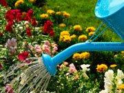 A irrigação das plantas