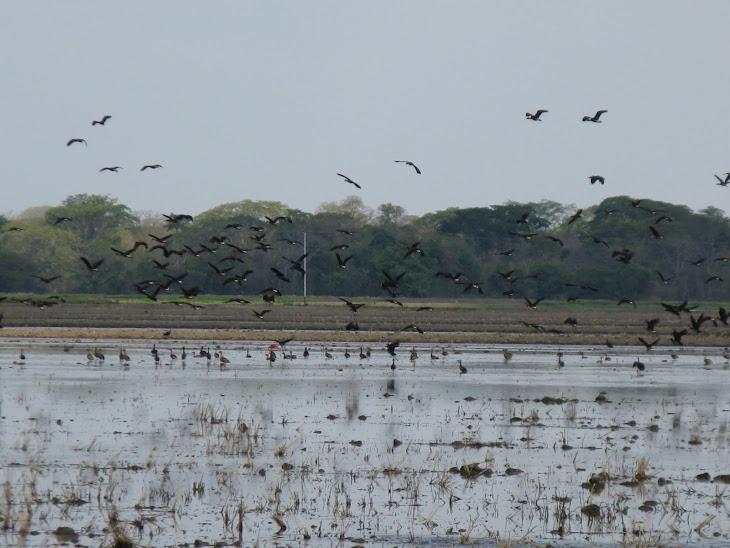 Nuestra tierra y aves