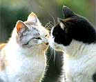 2 ekor kucing miang nak membiak...