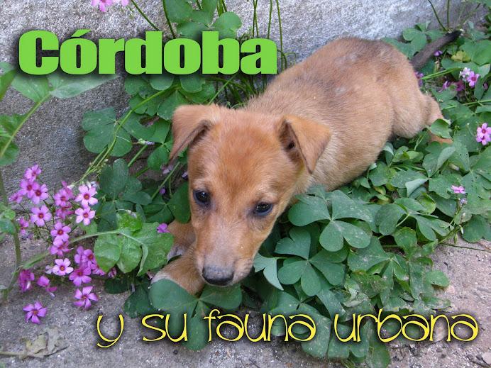 Fauna Urbana de Córdoba