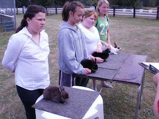 4-H Rabbit show