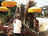 Villagers eat, love and pray to 'magical' tree