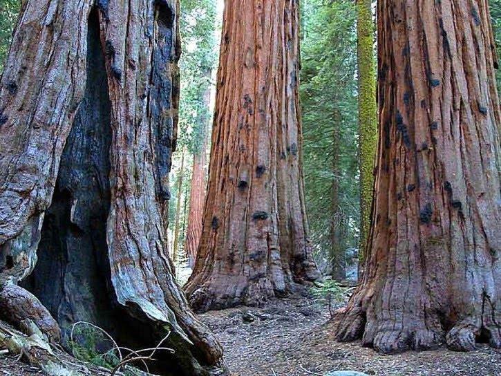 Sequoia Vancouver Island