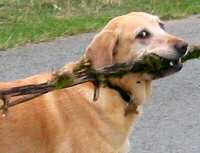 Some dogs collect things!