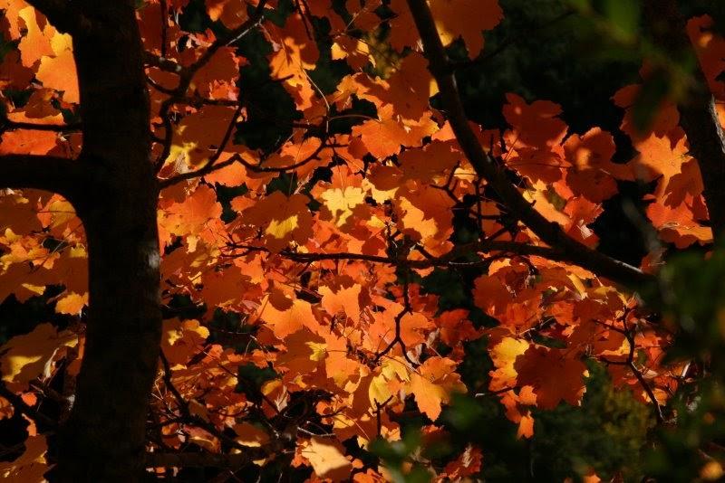 Naturaleza a raudales hoja perenne y hoja caduca that s for Arboles hoja caduca y perenne