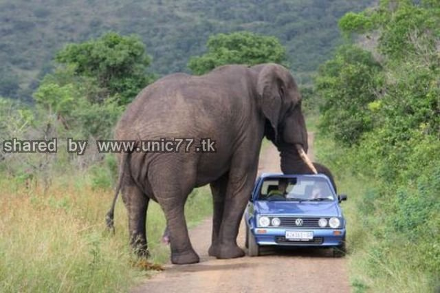 cars_and_animals_640_09.jpg (640×426)