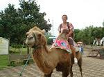 KC on a camel
