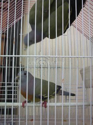 Macam-macam Burung… | ondscene.my
