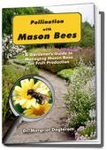 MASON BEES--a great way to pollinate your fruit trees..