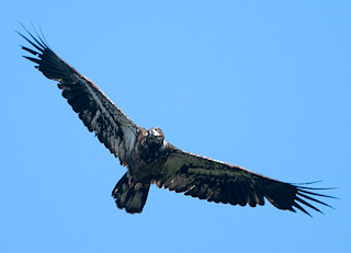 WPBO Hawk Count Spring 2010