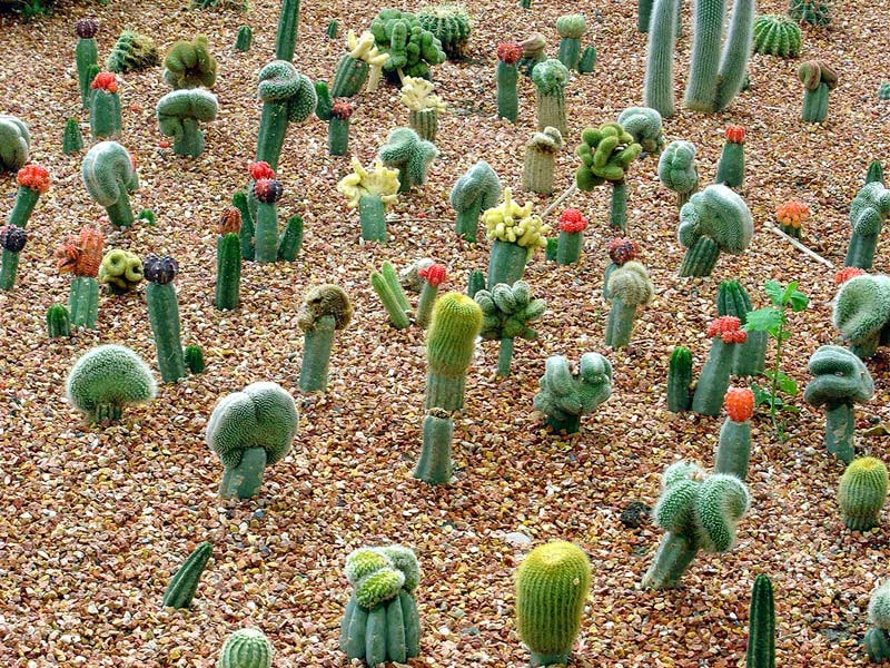 dunia i n s p i r a s i kaktus dan filosofinya