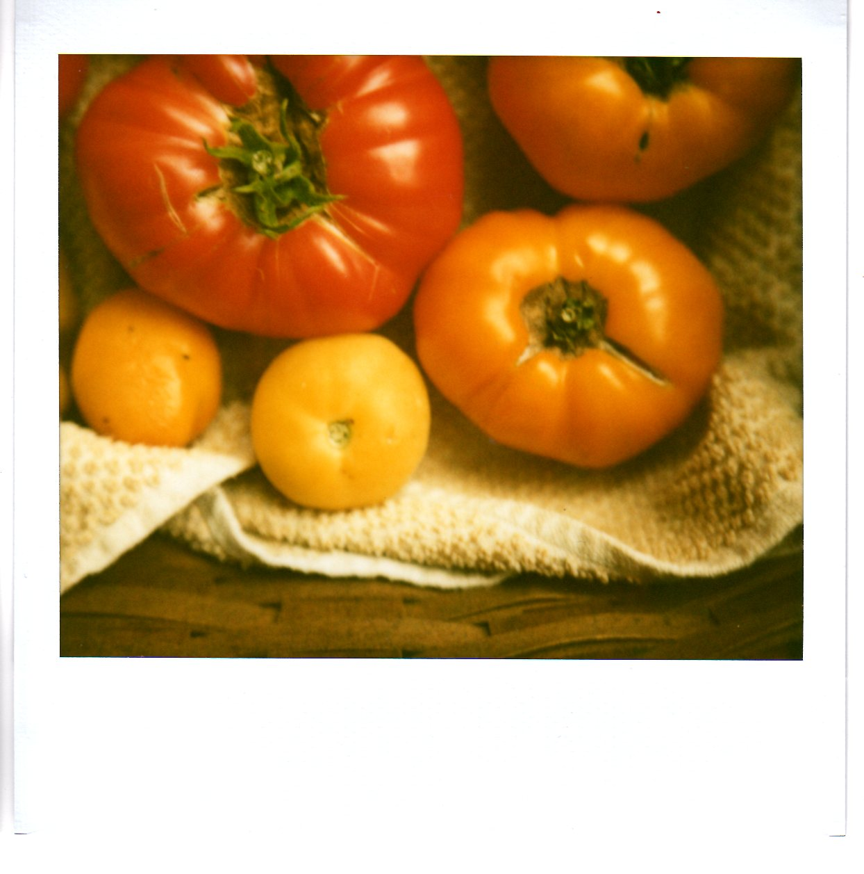 ode to tomatoes Posts about ode to tomatoes written by foodinbooks.