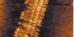AFM images of DNA