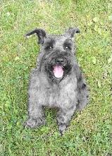 Doggy Centurion Oskar