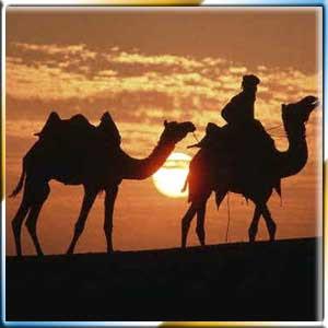 http://2.bp.blogspot.com/_maSavk9KWzM/S7PiT70ZTXI/AAAAAAAAADk/JGl5_FY_rUA/s320/camel-safari-10296.jpg