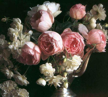 Nel mondo di pimpinella le rose antiche profumate di for Rose inglesi